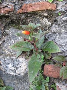 Panama.October.2009 282